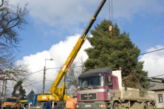 Érd – Karácsonyfa Állítás 2010
